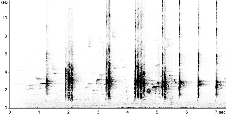 Sonogram of Black-backed Woodpecker calls