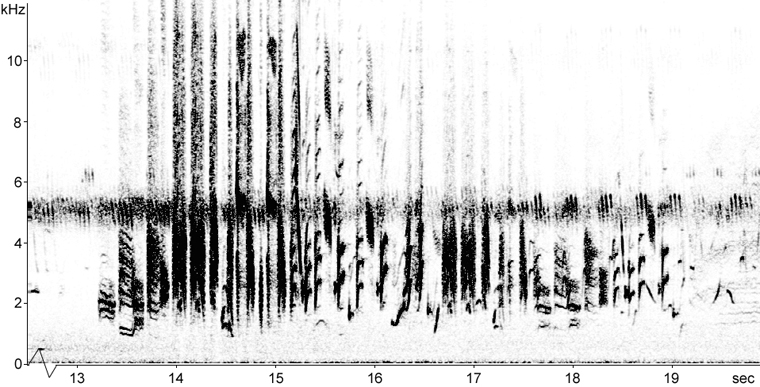 Sonogram of Bobolink song uttered during display flight