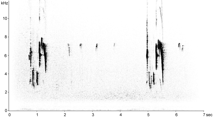 Sonogram of Boreal Chickadee calls