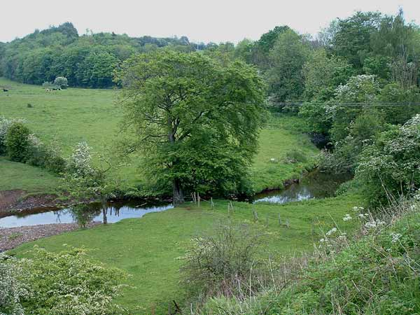 Point 1. View from bridge over Carmel Water: Warblers, Long-tailed Tit, Bullfinch, Great Spotted Woodpecker, Song Thrush, etc.