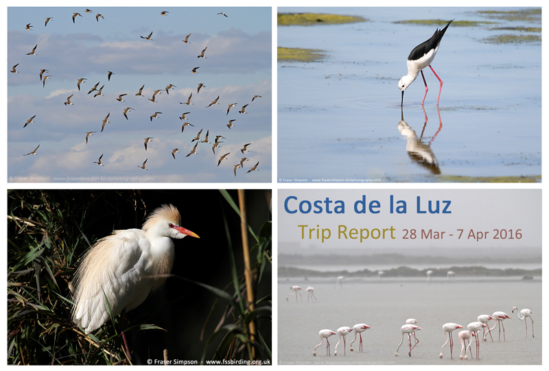 New trip report from southwest Spain, 28 March - 7 April 2016