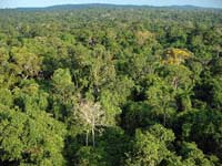 Amazon Rainforest, Mato Grosso