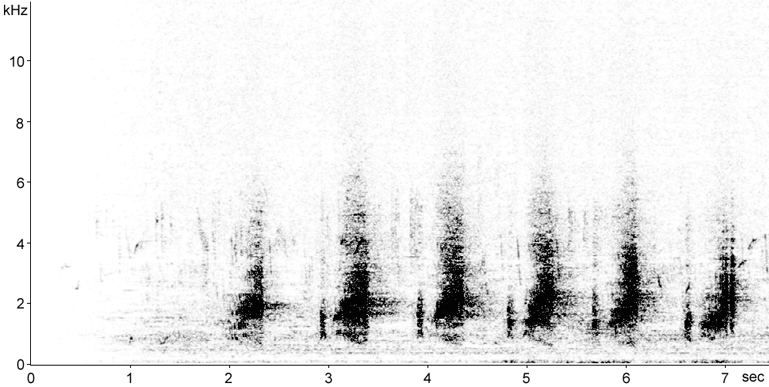 Sonogram of Double-spurred Francolin song