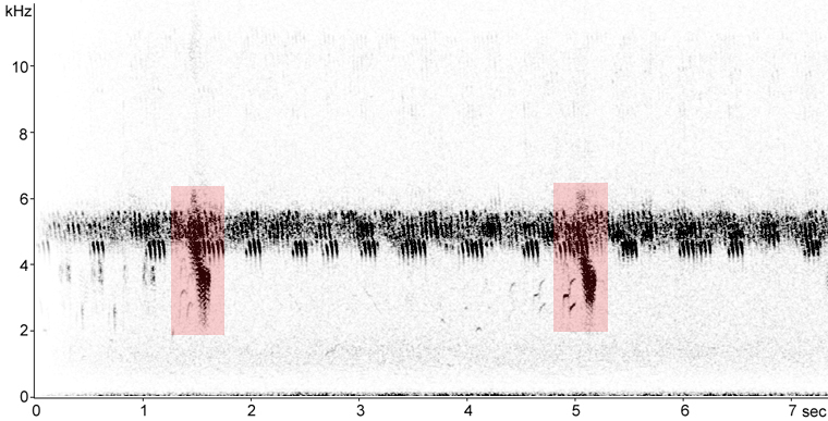 Sonogram of Eastern Meadowlark calls