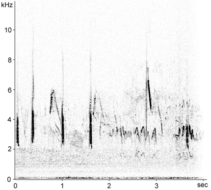 Sonogram of Calandra Lark perched song