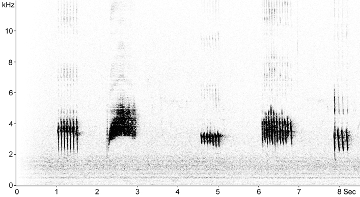 Sonogram of Greenfinch song