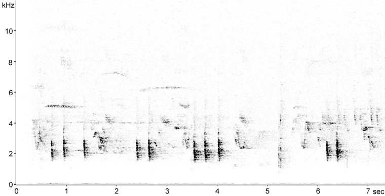 Sonogram of Hermit Thrush call