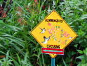 To Hummingbird Crossing