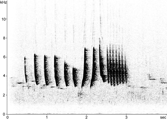 Sonogram of Iberian Chiffchaff song