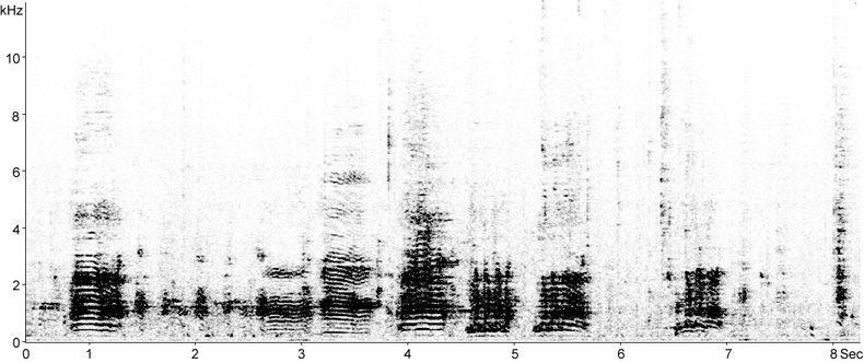 Sonogram of breeding calls from a Little Egret breeding colony