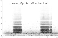 Lesser Spotted Woodpecker sonogram � Fraser Simpson www.fssbirding.org.uk