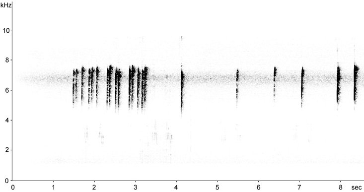 Sonogram of Northern Cardinal calls