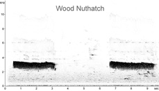 Wood Nuthatch sonogram � Fraser Simpson www.fssbirding.org.uk