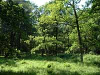 Oak Woodland at Ottenby on the island of Oland