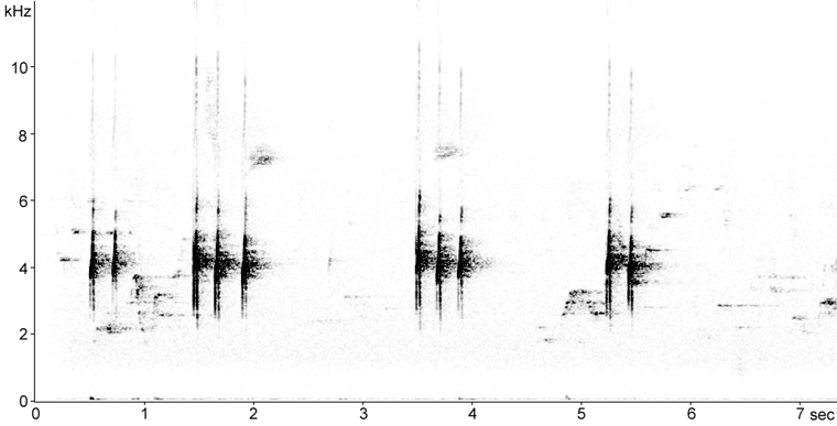 Sonogram of Black-capped Chickadee calls