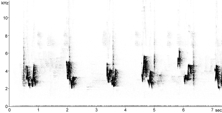 Sonogram of Red-eyed Vireo song