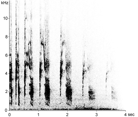Sonogram of Red-legged Partridge calls
