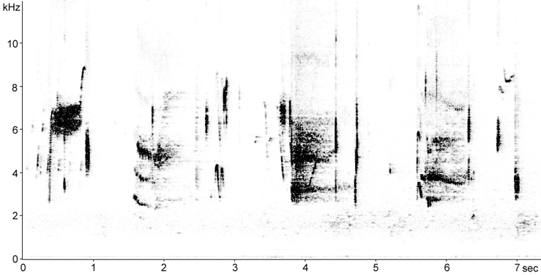 Sonogram of Saltmarsh Sparrow song