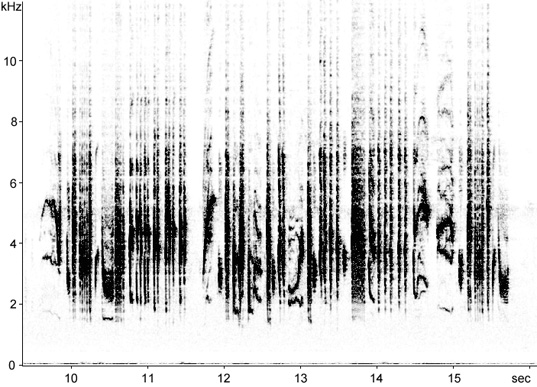 Sonogram of Sardinian Warbler song