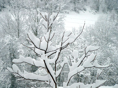 Snow at Cosgaya, Asturias, Spain � 04 March 2005 � 2005 Fraser Simpson