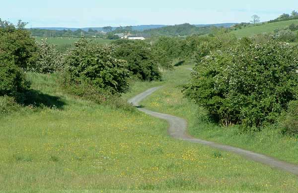 Point 6. View along the line from Springside: warblers, Tree Sparrow, Linnet, Oystercather.