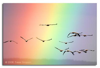 Cranes © 2008 Fraser Simpson