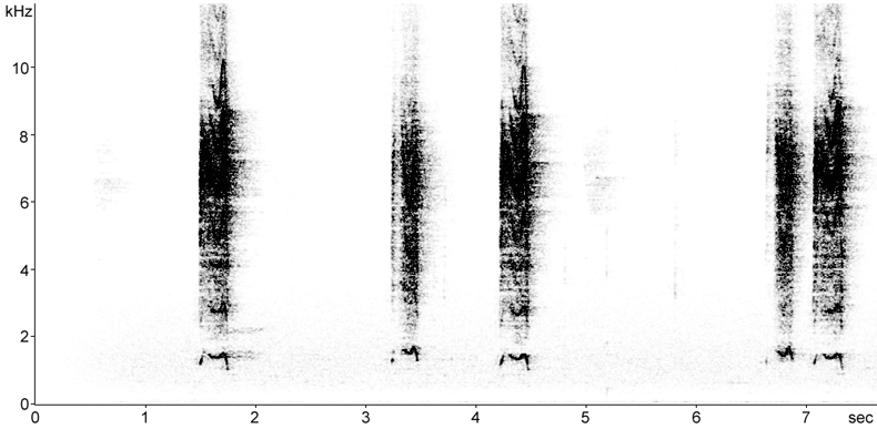 Sonogram of Tawny Owl fledgling begging calls