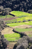 Agricultural terraces in the Atlas