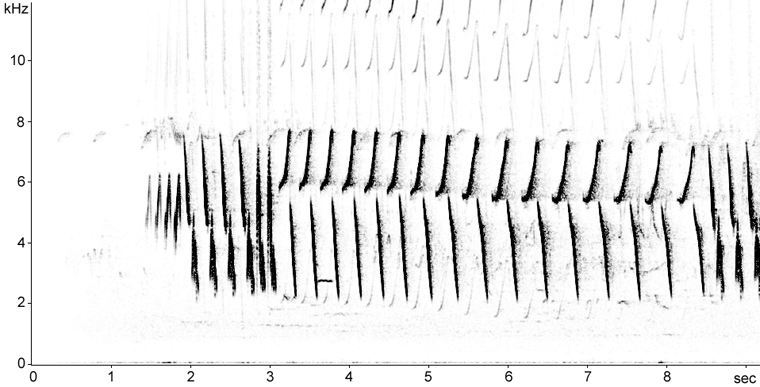 Sonogram of Tree Pipit perched song