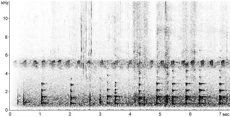 Sonogram of Wild Turkey calls