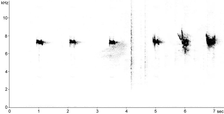Sonogram of Winter Wren calls