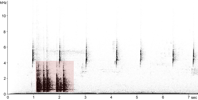 Sonogram of Yellow-bellied Sapsucker drumming