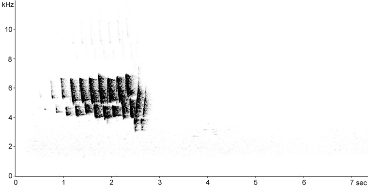 Sonogram of Yellow-rumped Warbler song